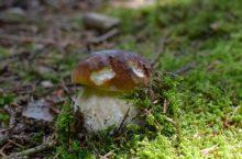 3 tipy, jak zpracovat houby